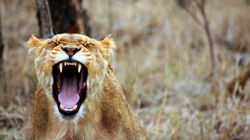 Anger Management Strategies And Advice
